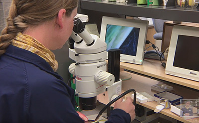 Photo of Mary Burrows using a lab microscope